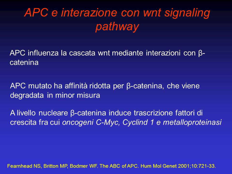 Fearnhead NS, Britton MP, Bodmer WF. The ABC of APC. Hum Mol Genet 2001;10:721-33. APC e interazione con wnt signaling pathway APC influenza la cascat