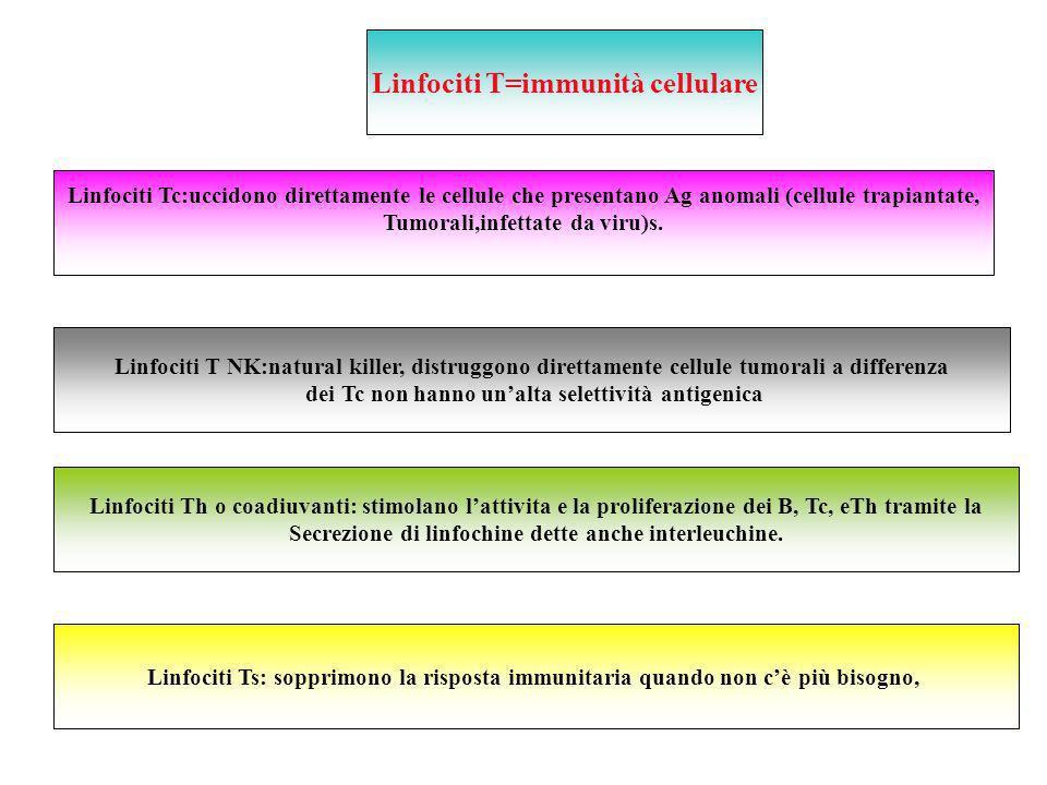 Teoria istruttiva Teoria della selezione clonale Cellule B e memoria immunologica Plasmacellule Anticorpi