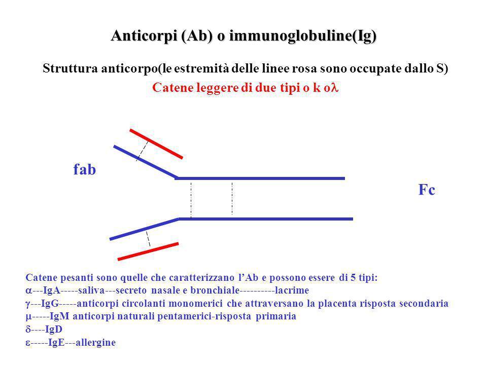 Sistema immunitario Costituito da un insieme di organi e strutture che nel corso dellontogenesi subiscono un processo di differenziazione Cellule T im