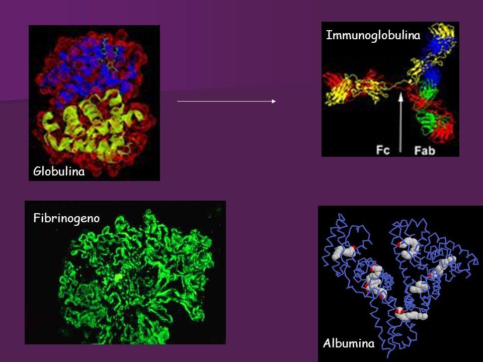 Globulina Fibrinogeno Albumina Immunoglobulina
