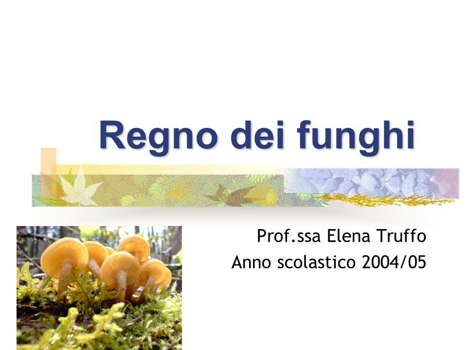 Regno dei funghi Prof.ssa Elena Truffo Anno scolastico 2004/05