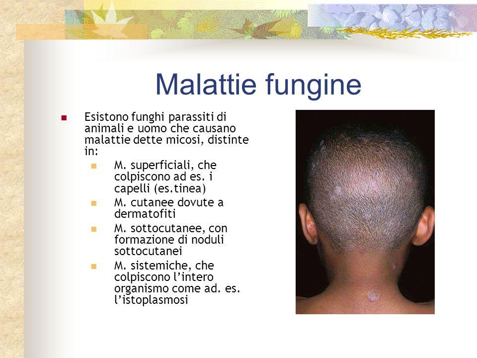 Malattie fungine Esistono funghi parassiti di animali e uomo che causano malattie dette micosi, distinte in: M. superficiali, che colpiscono ad es. i