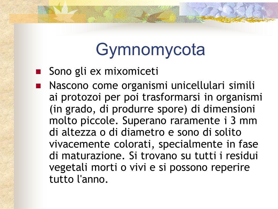 Gymnomycota Sono gli ex mixomiceti Nascono come organismi unicellulari simili ai protozoi per poi trasformarsi in organismi (in grado, di produrre spo