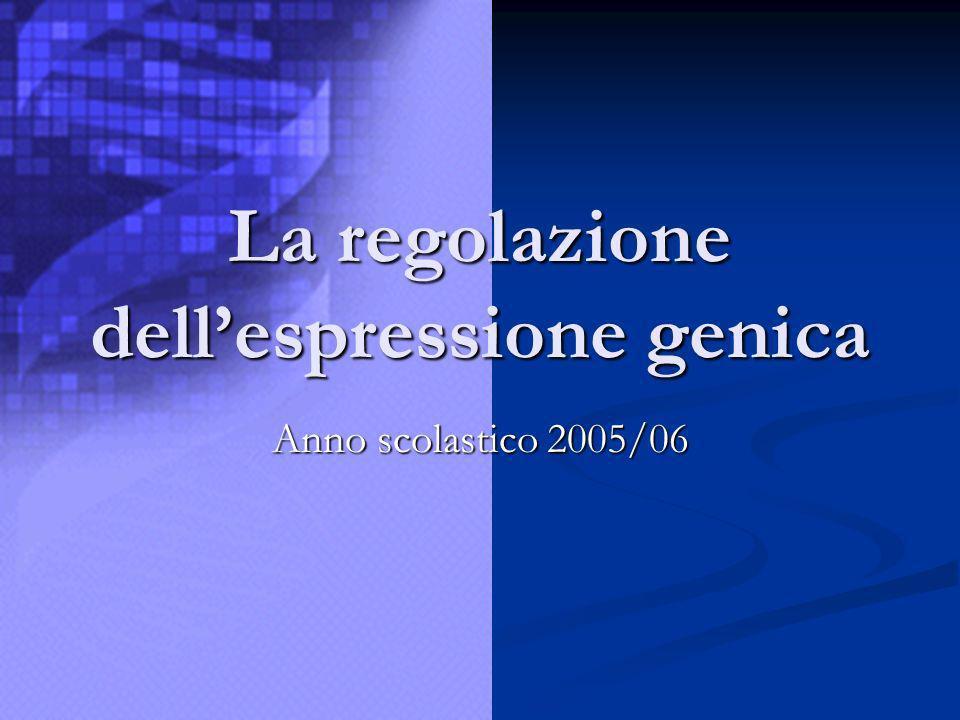 La regolazione dellespressione genica Anno scolastico 2005/06