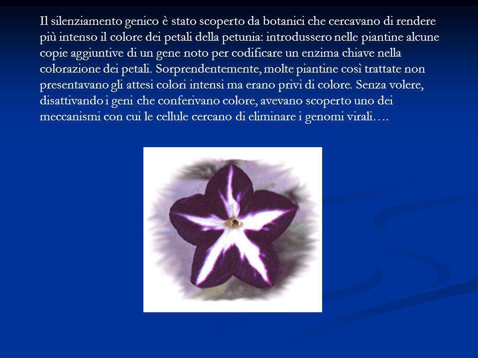 Il silenziamento genico è stato scoperto da botanici che cercavano di rendere più intenso il colore dei petali della petunia: introdussero nelle piant