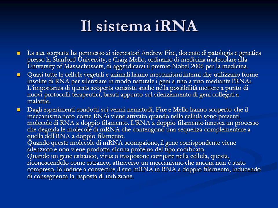 Il sistema iRNA La sua scoperta ha permesso ai ricercatori Andrew Fire, docente di patologia e genetica presso la Stanford University, e Craig Mello,