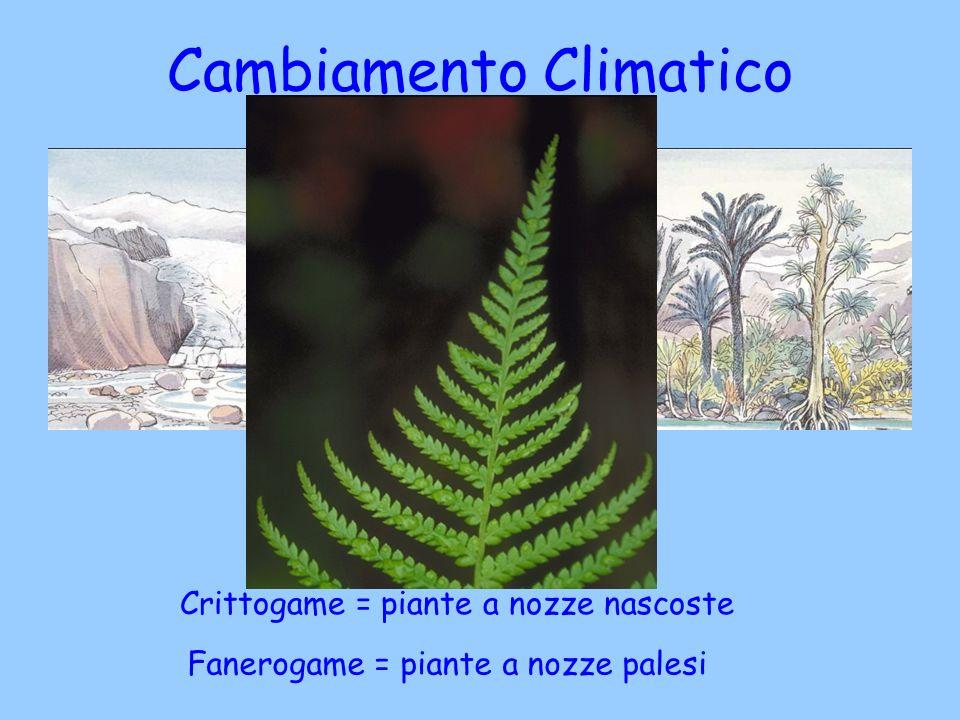 Cambiamento Climatico registrato nella pietra Crittogame = piante a nozze nascoste Fanerogame = piante a nozze palesi