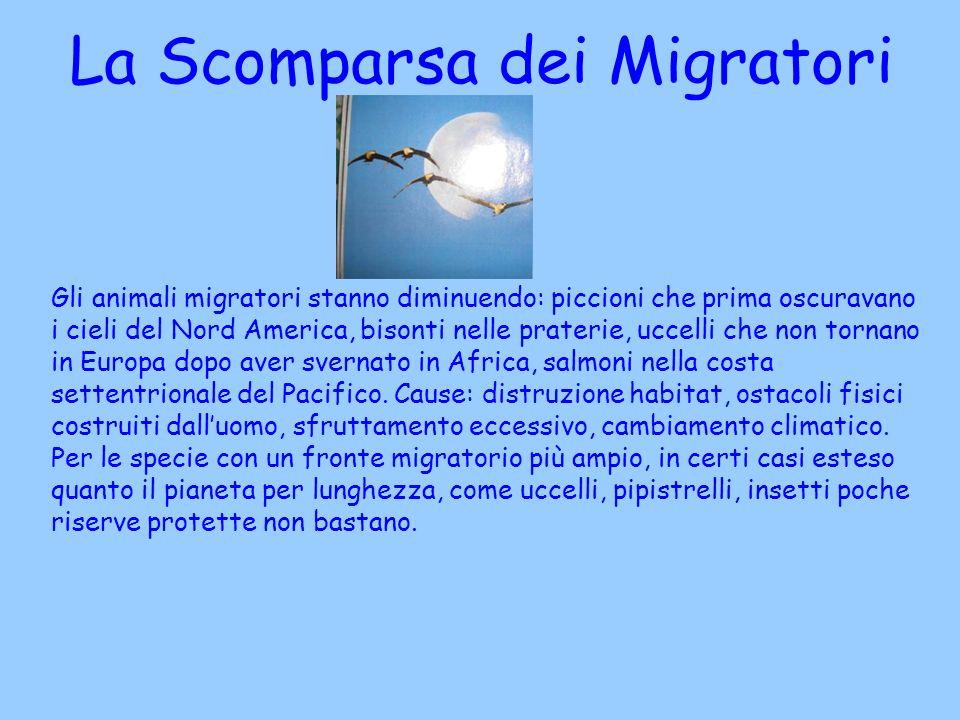 Gli animali migratori stanno diminuendo: piccioni che prima oscuravano i cieli del Nord America, bisonti nelle praterie, uccelli che non tornano in Eu