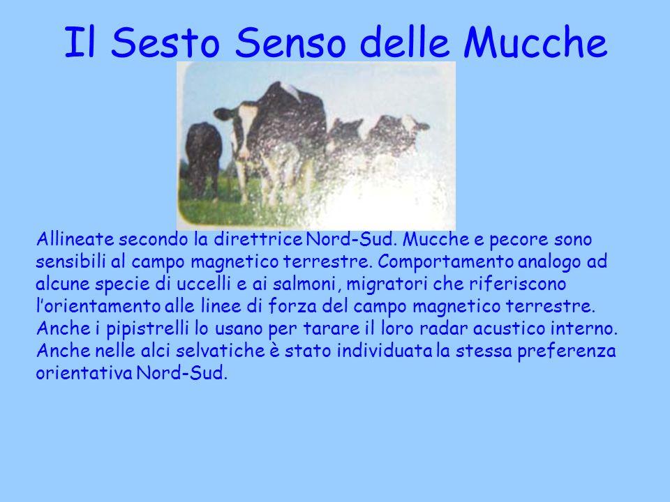 Allineate secondo la direttrice Nord-Sud. Mucche e pecore sono sensibili al campo magnetico terrestre. Comportamento analogo ad alcune specie di uccel