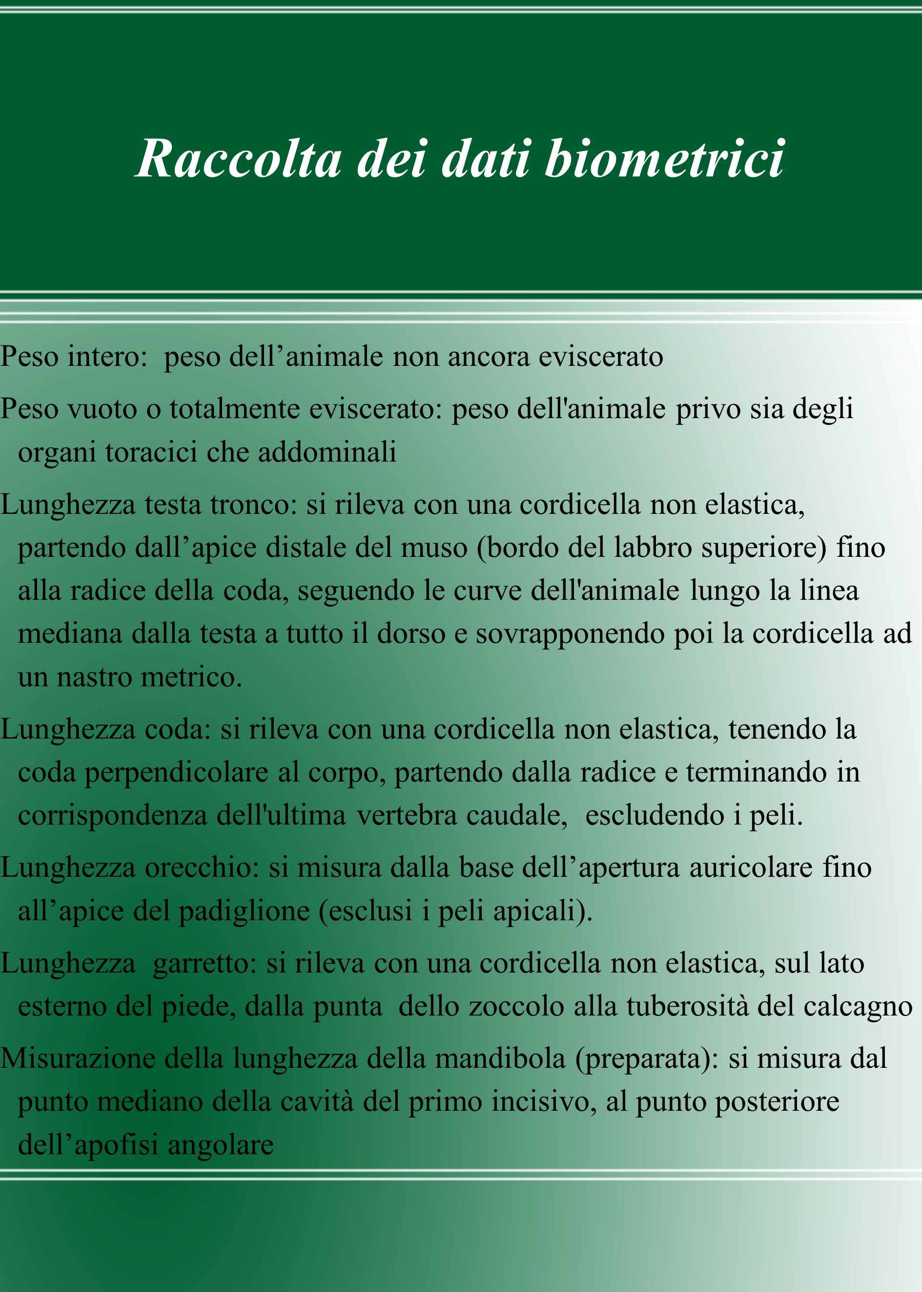 Raccolta dei dati biometrici Peso intero: peso dellanimale non ancora eviscerato Peso vuoto o totalmente eviscerato: peso dell'animale privo sia degli