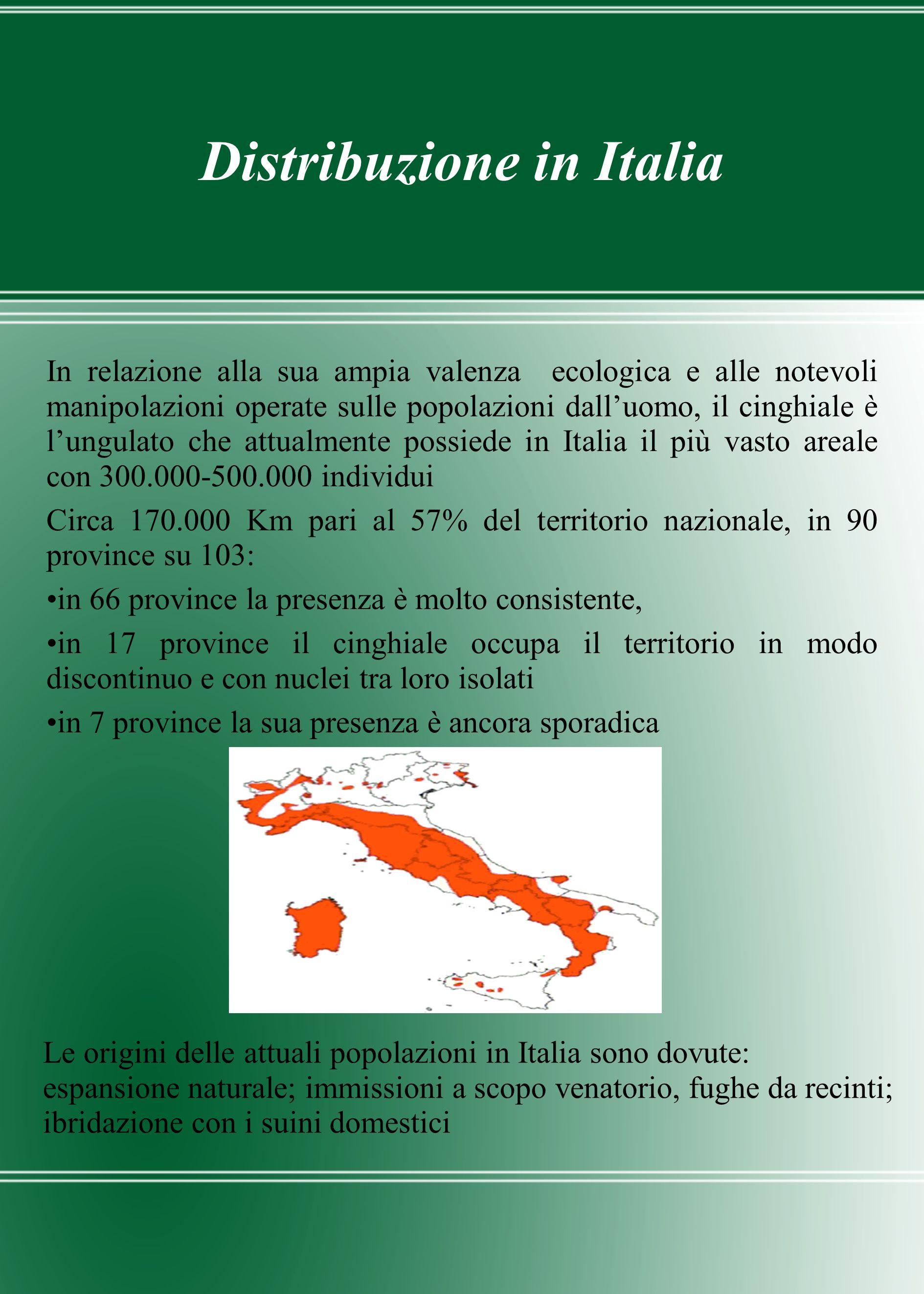 Distribuzione in Italia In relazione alla sua ampia valenza ecologica e alle notevoli manipolazioni operate sulle popolazioni dalluomo, il cinghiale è