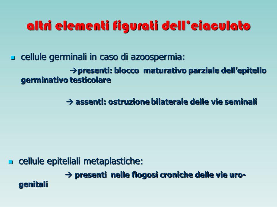 altri elementi figurati delleiaculato cellule germinali in caso di azoospermia: cellule germinali in caso di azoospermia: presenti: blocco maturativo