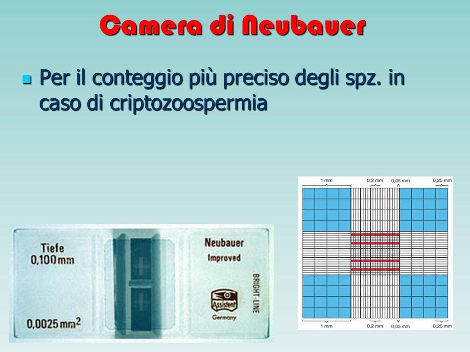 Camera di Neubauer Per il conteggio più preciso degli spz. in caso di criptozoospermia Per il conteggio più preciso degli spz. in caso di criptozoospe
