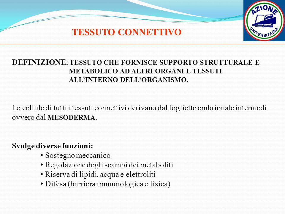 TESSUTO CONNETTIVO DEFINIZIONE : TESSUTO CHE FORNISCE SUPPORTO STRUTTURALE E METABOLICO AD ALTRI ORGANI E TESSUTI ALLINTERNO DELLORGANISMO. Le cellule