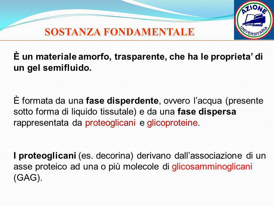SOSTANZA FONDAMENTALE È un materiale amorfo, trasparente, che ha le proprieta di un gel semifluido. È formata da una fase disperdente, ovvero lacqua (
