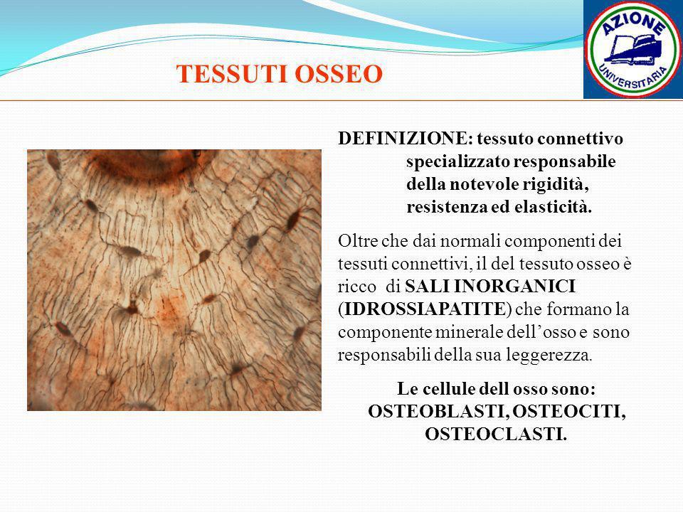 TESSUTI OSSEO DEFINIZIONE: tessuto connettivo specializzato responsabile della notevole rigidità, resistenza ed elasticità. Oltre che dai normali comp