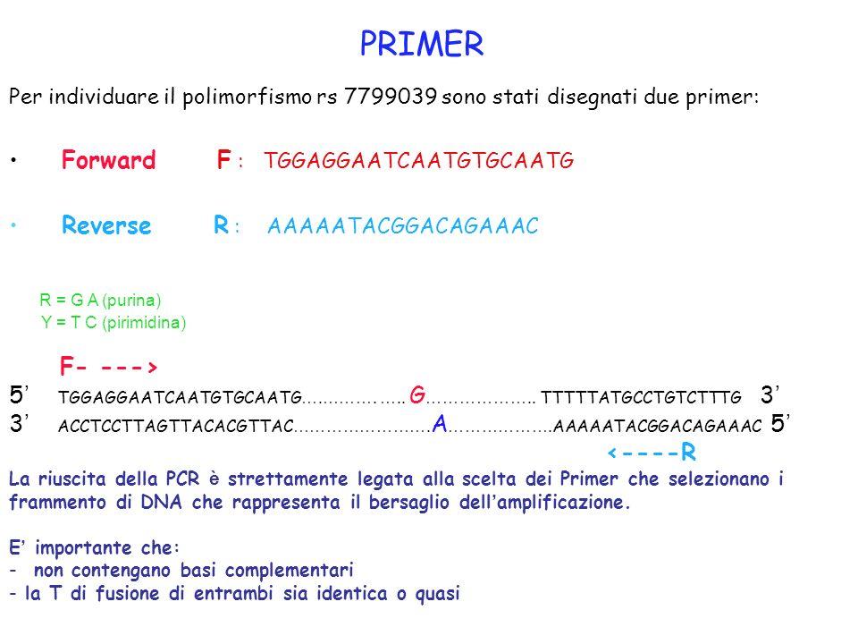 PRIMER Per individuare il polimorfismo rs 7799039 sono stati disegnati due primer: Forward F : TGGAGGAATCAATGTGCAATG Reverse R : AAAAATACGGACAGAAAC R
