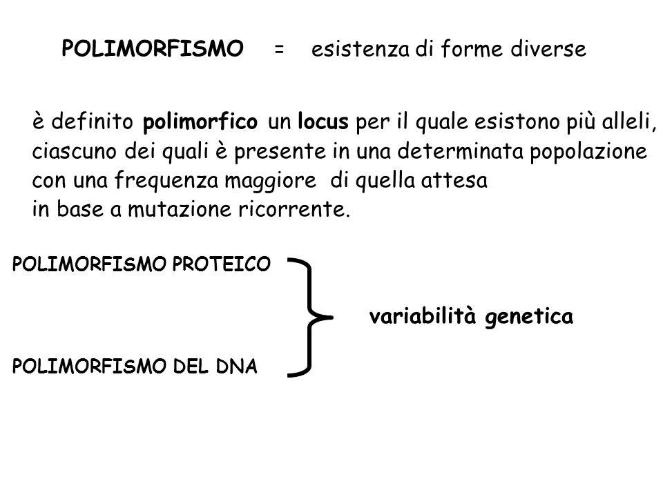 POLIMORFISMO = esistenza di forme diverse è definito polimorfico un locus per il quale esistono più alleli, ciascuno dei quali è presente in una deter