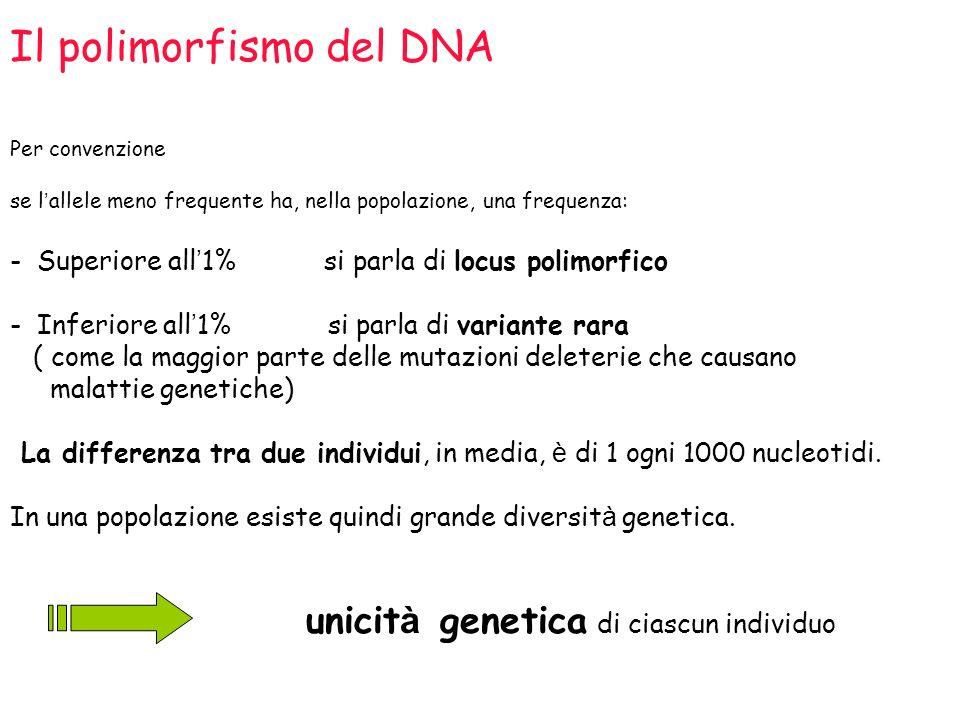 Il polimorfismo del DNA Per convenzione se l allele meno frequente ha, nella popolazione, una frequenza: - Superiore all 1% si parla di locus polimorf