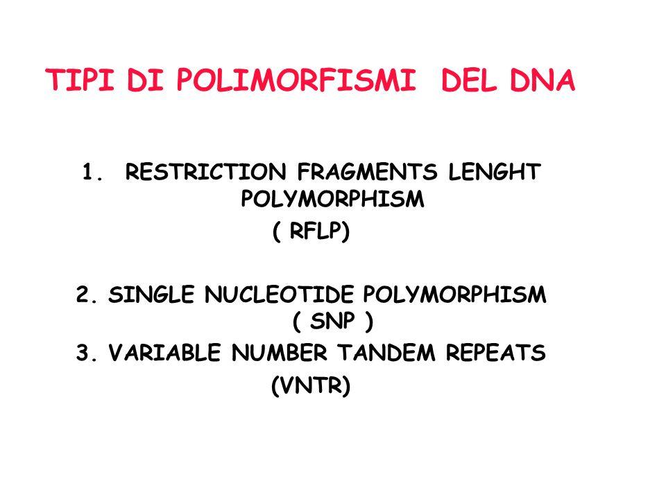 1.POLIMORFISMI DI LUNGHEZZA DEI FRAMMENTI DI RESTRIZIONE ( RFLP, Restriction Fragment Lenght Polymorphisms ) A seguito di una mutazione si determina l abolizione o la creazione di un sito di restrizione per un enzima di restrizione, con conseguente variazione (polimorfismo) nella lunghezza dei frammenti di restrizione per un dato enzima di restrizione.