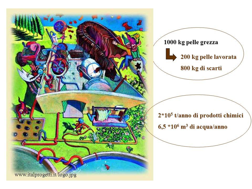 2*10 5 t/anno di prodotti chimici 6,5 *10 6 m 3 di acqua/anno 1000 kg pelle grezza 200 kg pelle lavorata 800 kg di scarti www.italprogetti.it/logo.jpg