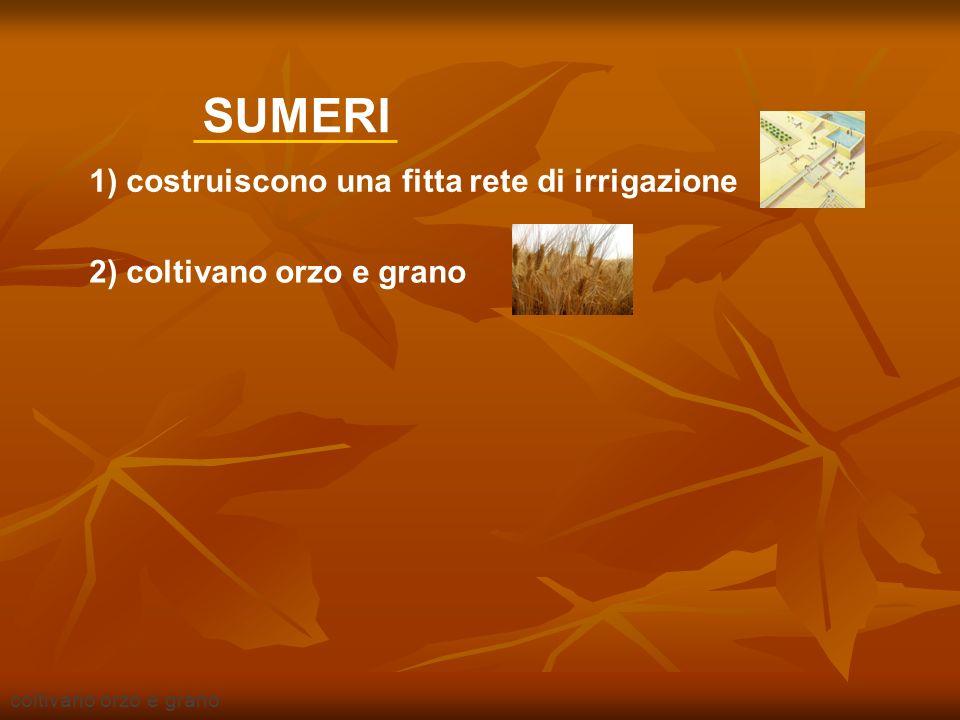 utilizzano la ruota piena SUMERI 2) coltivano orzo e grano 3) utilizzano la ruota piena 1) costruiscono una fitta rete di irrigazione