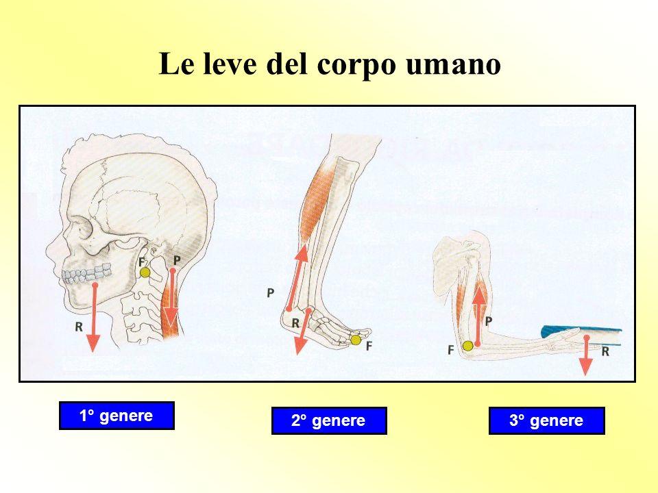 Le leve del corpo umano 1° genere 2° genere3° genere