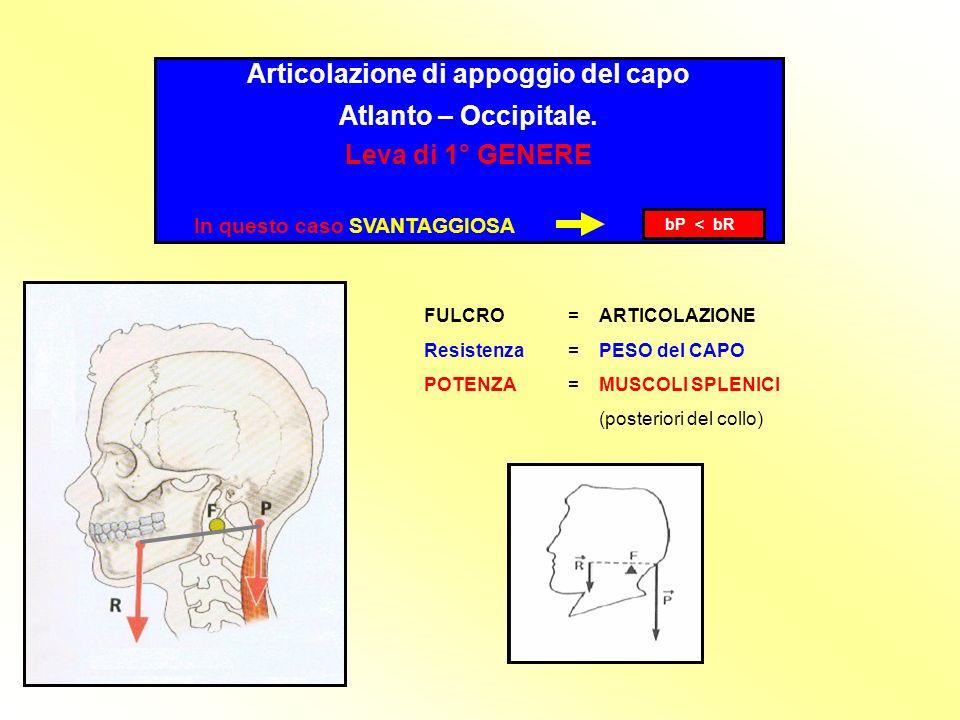 Articolazione di appoggio del capo Atlanto – Occipitale.
