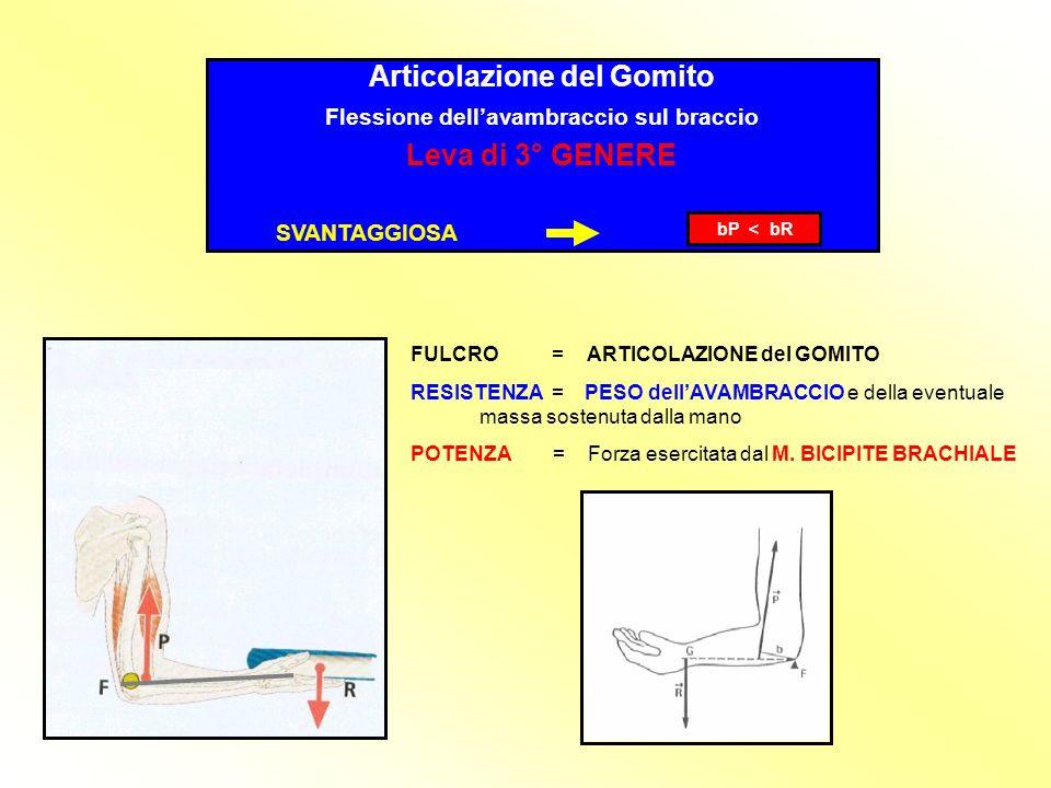 Articolazione del Gomito Flessione dellavambraccio sul braccio Leva di 3° GENERE SVANTAGGIOSA bP < bR FULCRO = ARTICOLAZIONE del GOMITO RESISTENZA = PESO dellAVAMBRACCIO e della eventuale massa sostenuta dalla mano POTENZA = Forza esercitata dal M.