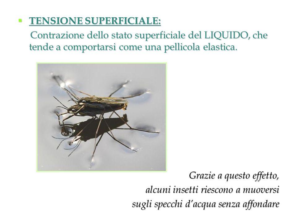 TENSIONE SUPERFICIALE: TENSIONE SUPERFICIALE: Contrazione dello stato superficiale del LIQUIDO, che tende a comportarsi come una pellicola elastica. C