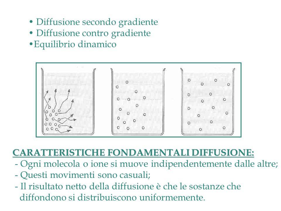 Diffusione secondo gradiente Diffusione contro gradiente Equilibrio dinamico CARATTERISTICHE FONDAMENTALI DIFFUSIONE: - Ogni molecola o ione si muove indipendentemente dalle altre; - Questi movimenti sono casuali; - Il risultato netto della diffusione è che le sostanze che diffondono si distribuiscono uniformemente.