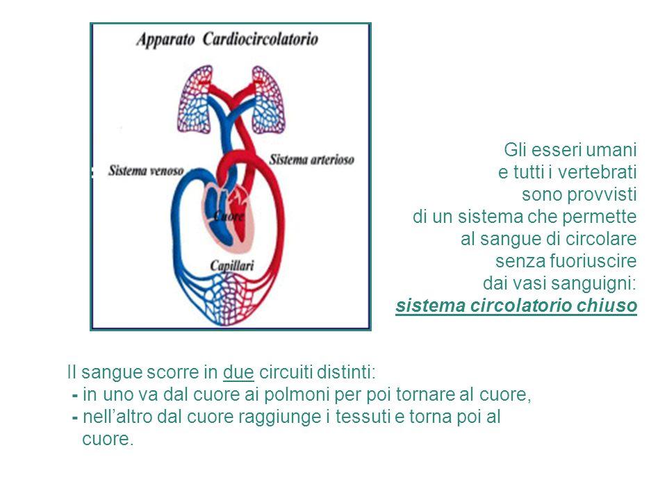 Gli esseri umani e tutti i vertebrati sono provvisti di un sistema che permette al sangue di circolare senza fuoriuscire dai vasi sanguigni: sistema c