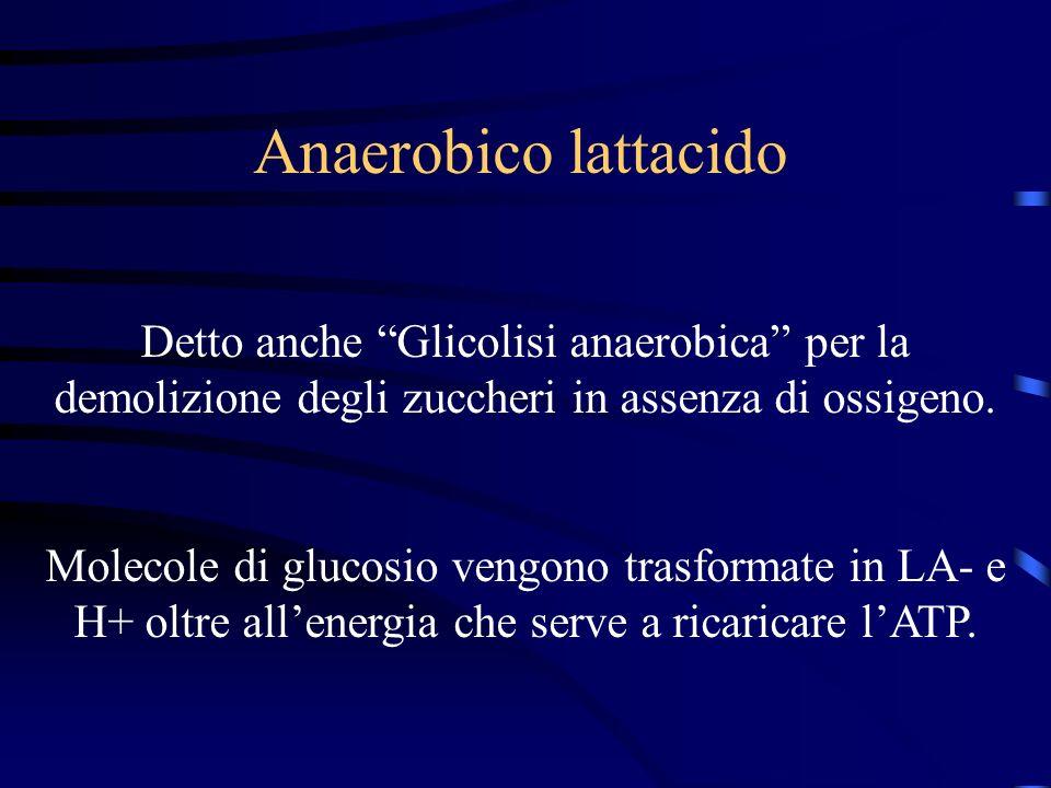 Anaerobico lattacido Detto anche Glicolisi anaerobica per la demolizione degli zuccheri in assenza di ossigeno. Molecole di glucosio vengono trasforma