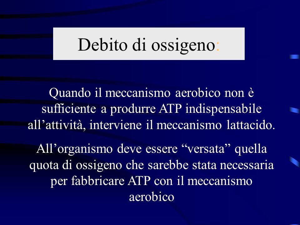 Debito di ossigeno: Quando il meccanismo aerobico non è sufficiente a produrre ATP indispensabile allattività, interviene il meccanismo lattacido. All