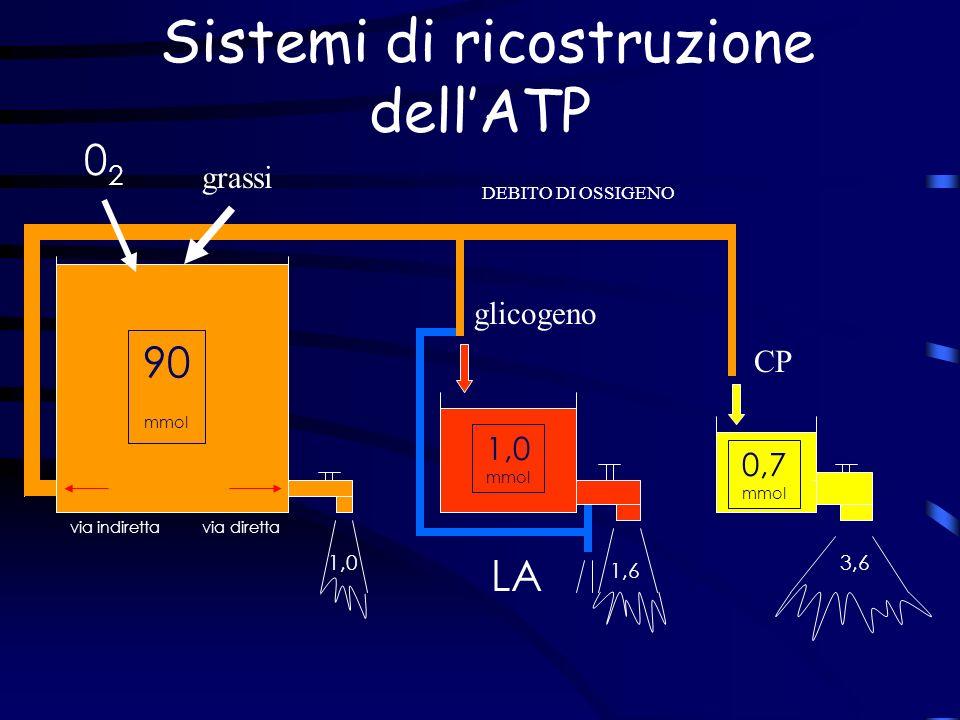 90 mmol 1,0 1,6 3,6 0202 LA CP via indiretta via diretta 1,0 mmol 0,7 mmol glicogeno grassi Sistemi di ricostruzione dellATP DEBITO DI OSSIGENO