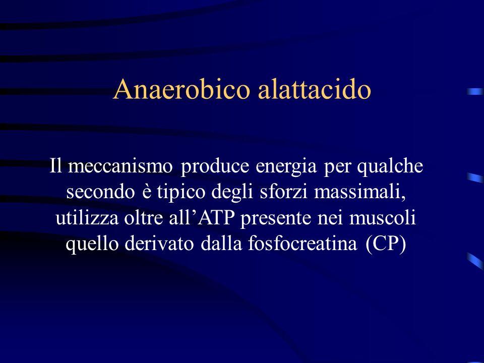 Anaerobico alattacido Il meccanismo produce energia per qualche secondo è tipico degli sforzi massimali, utilizza oltre allATP presente nei muscoli qu
