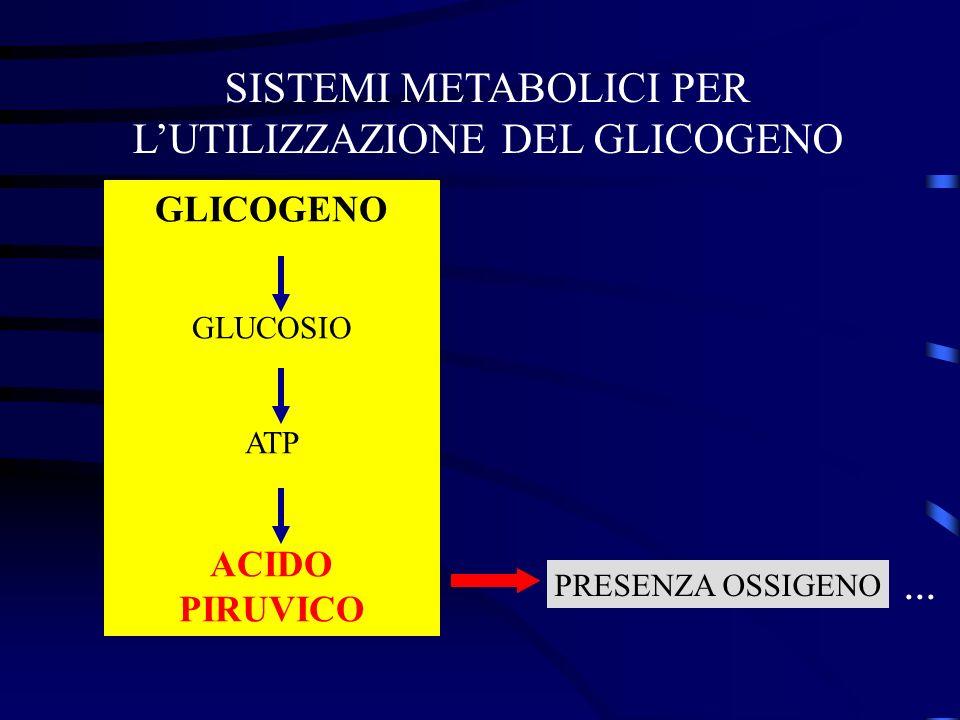 SISTEMI METABOLICI PER LUTILIZZAZIONE DEL GLICOGENO GLICOGENO GLUCOSIO ATP ACIDO PIRUVICO PRESENZA OSSIGENO...