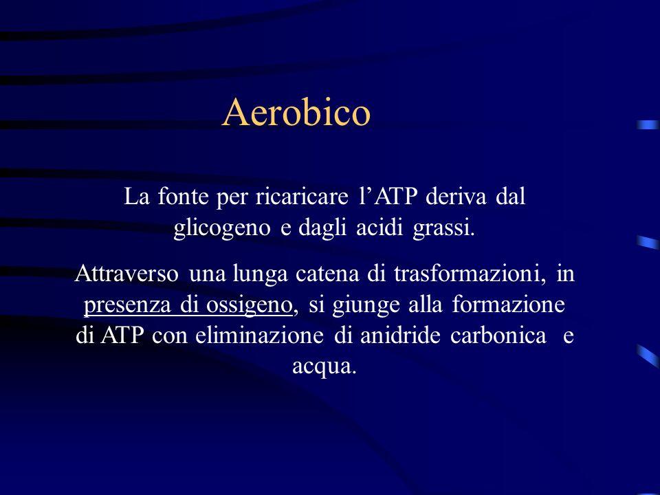Aerobico La fonte per ricaricare lATP deriva dal glicogeno e dagli acidi grassi. Attraverso una lunga catena di trasformazioni, in presenza di ossigen