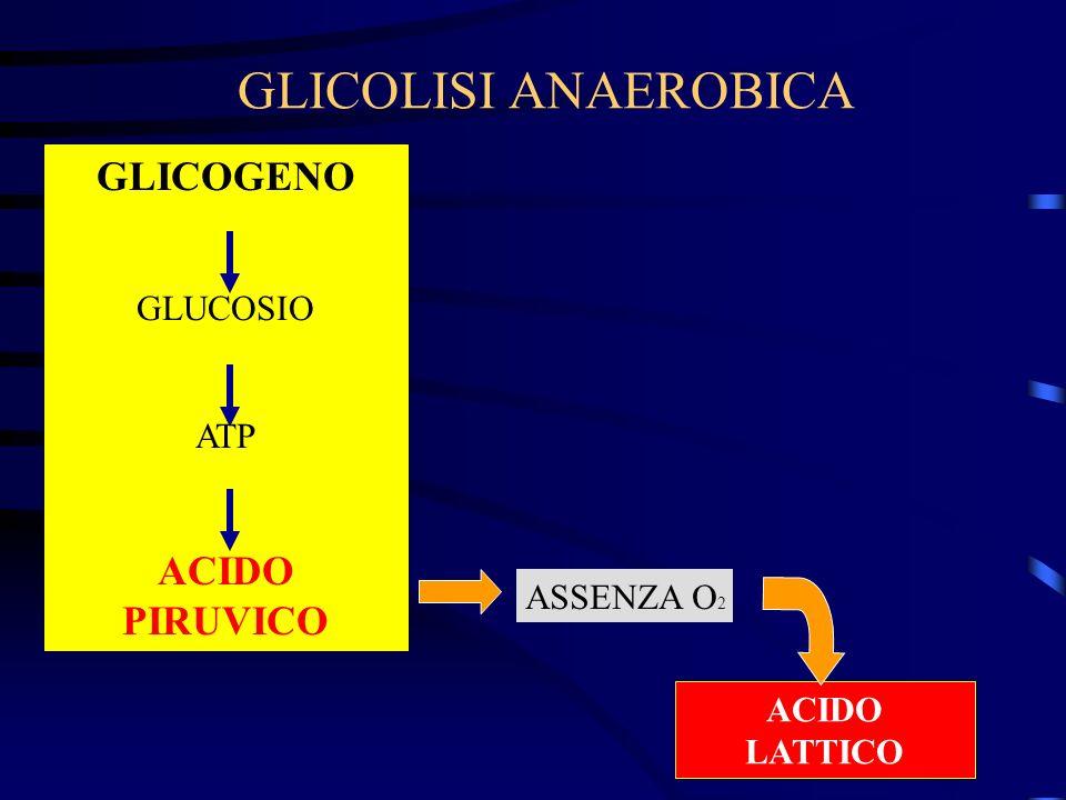 GLICOLISI ANAEROBICA GLICOGENO GLUCOSIO ATP ACIDO PIRUVICO ACIDO LATTICO ASSENZA O 2