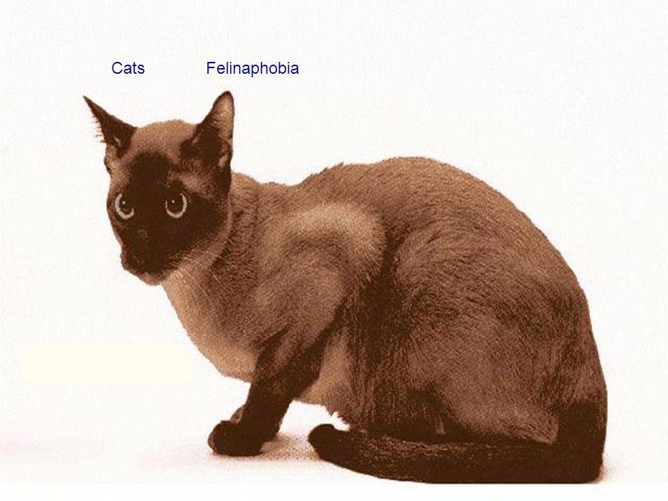 CatsFelinaphobia
