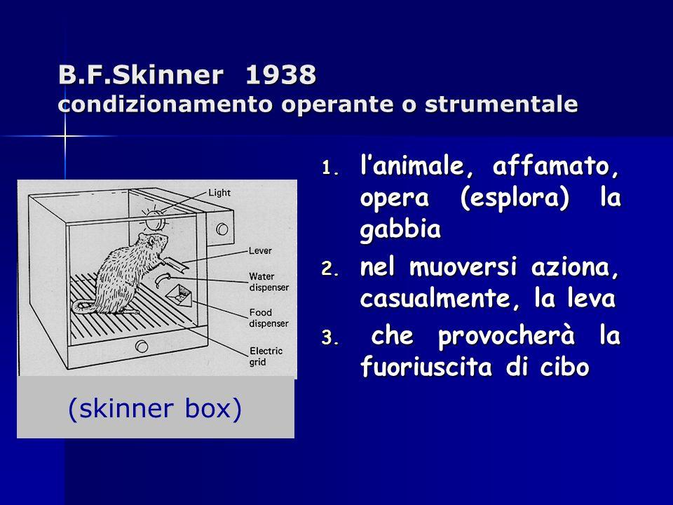 B.F.Skinner 1938 condizionamento operante o strumentale 1. lanimale, affamato, opera (esplora) la gabbia 2. nel muoversi aziona, casualmente, la leva