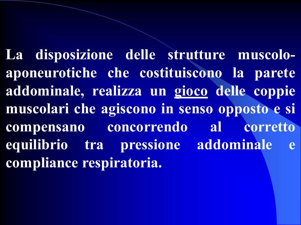 La disposizione delle strutture muscolo- aponeurotiche che costituiscono la parete addominale, realizza un gioco delle coppie muscolari che agiscono i