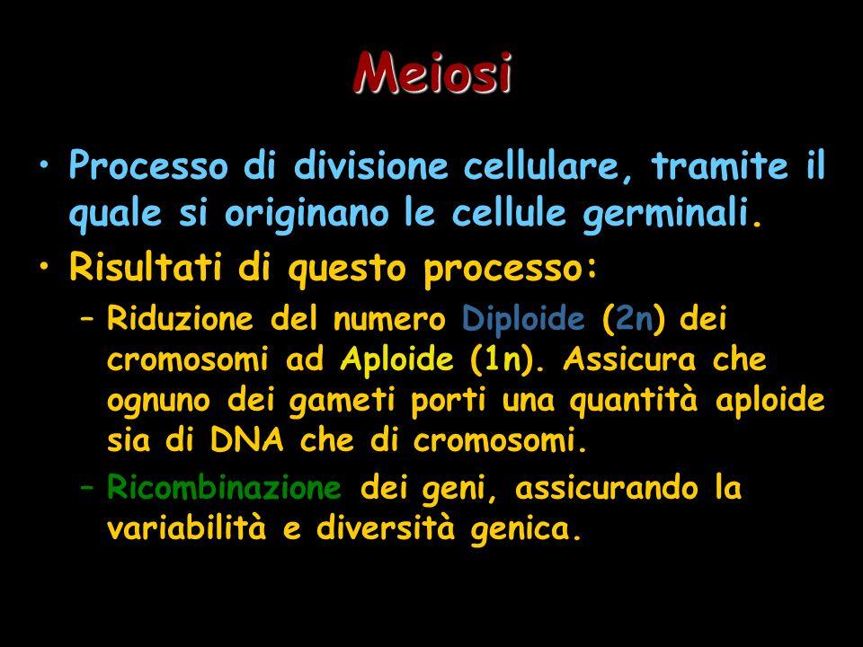 Meiosi Processo di divisione cellulare, tramite il quale si originano le cellule germinali. Risultati di questo processo: –Riduzione del numero Diploi