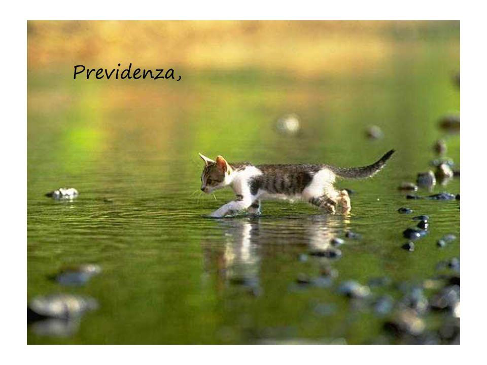 Previdenza,