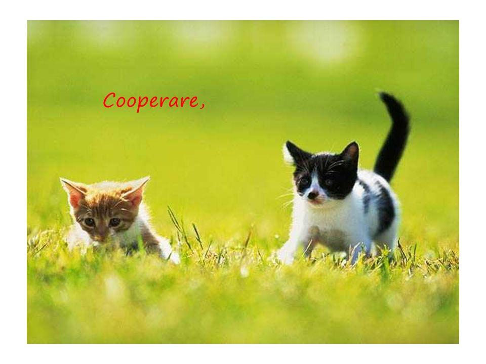 Cooperare,