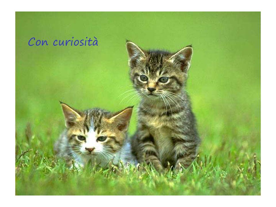 Con curiosità