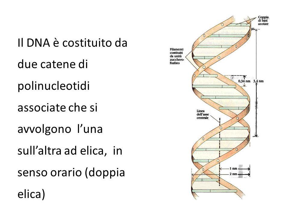 Dove si trova il DNA.