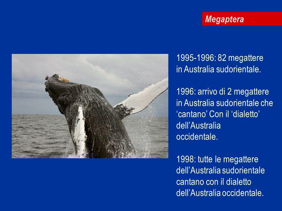 Megaptera 1995-1996: 82 megattere in Australia sudorientale. 1996: arrivo di 2 megattere in Australia sudorientale che cantano Con il dialetto dellAus