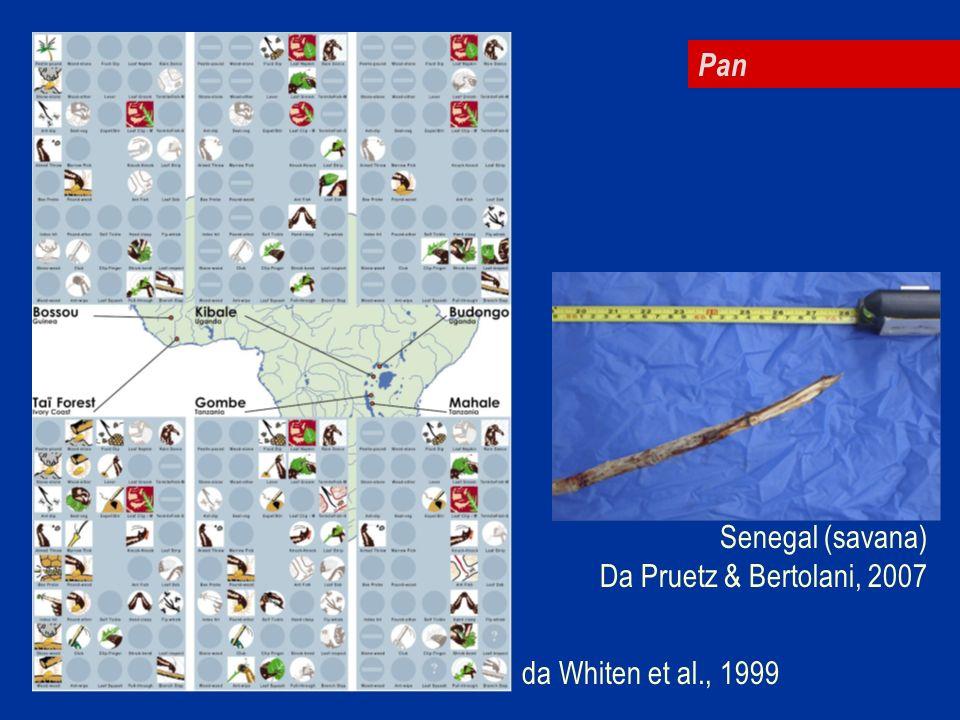 Pan da Whiten et al., 1999 Senegal (savana) Da Pruetz & Bertolani, 2007