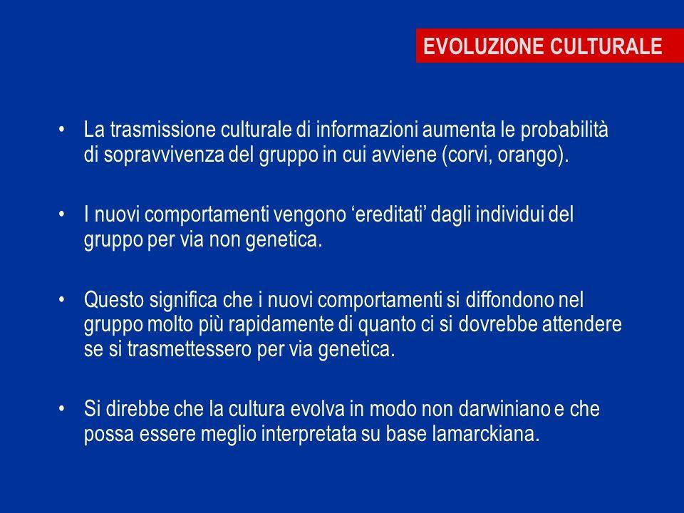 EVOLUZIONE CULTURALE La trasmissione culturale di informazioni aumenta le probabilità di sopravvivenza del gruppo in cui avviene (corvi, orango). I nu